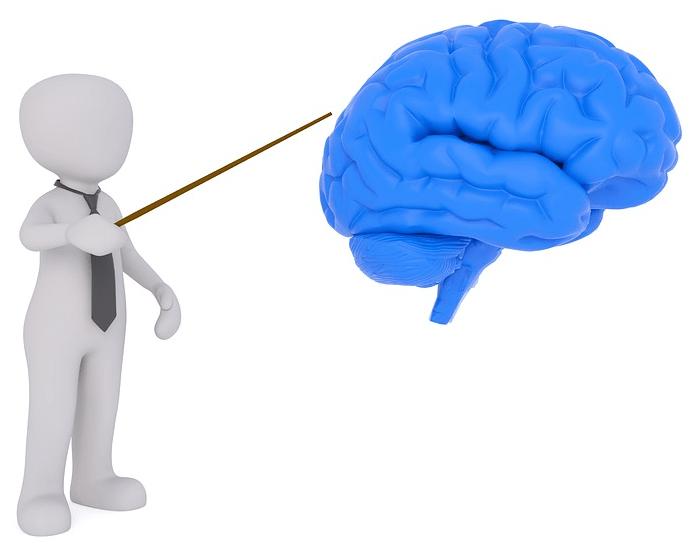 左脳と右脳の働きの違い